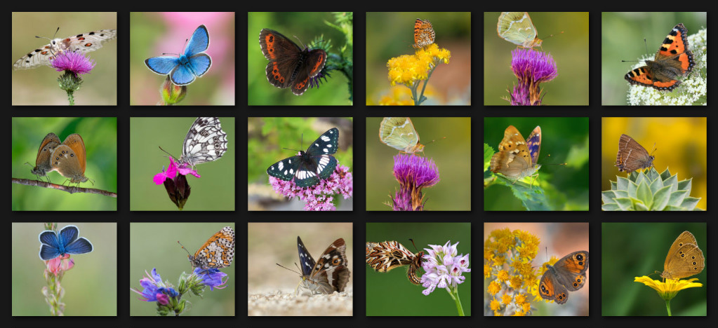 The Gallery of butterflies in Croatia