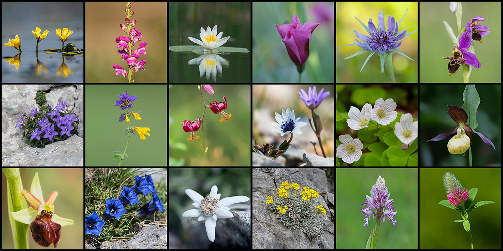 Slider 2 photo of wild flowers