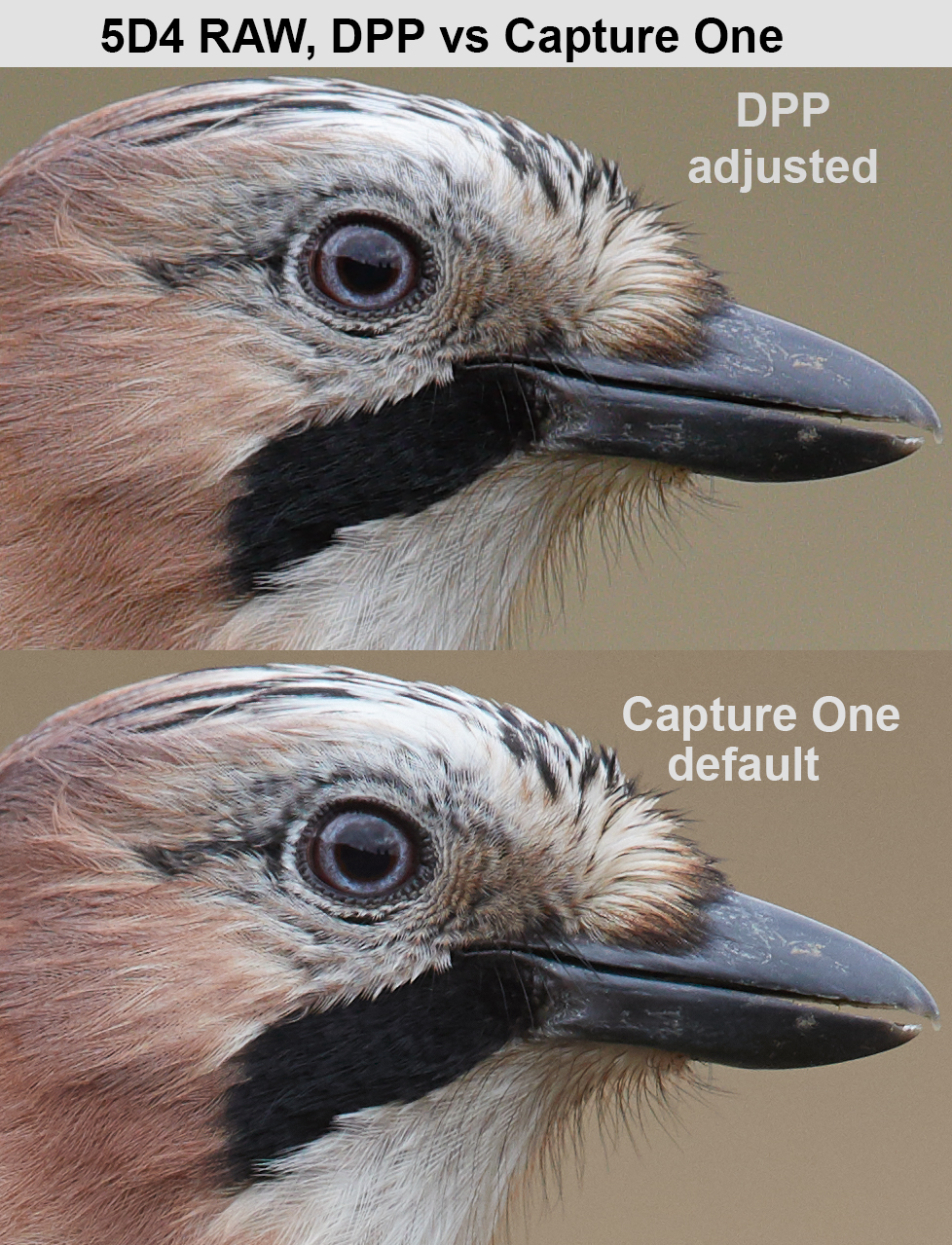 5D4 RAW in Digital Photo Professional vs Capture One