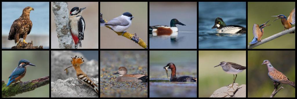 The List of Croatian Birds